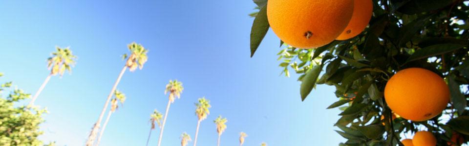 oranges_960x300